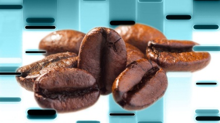 Coffee Beans PIC.